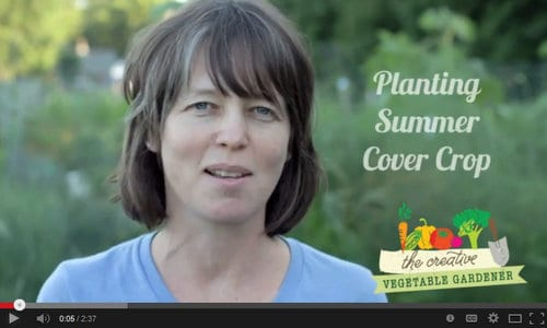 How to plant buckwheat, oats and peas in the fall garden.