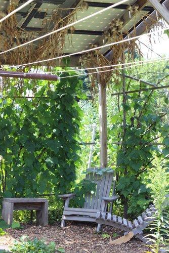 Solar Trellis in Vegetable Garden