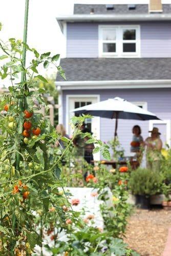 Urban Vegetable Garden with Deck