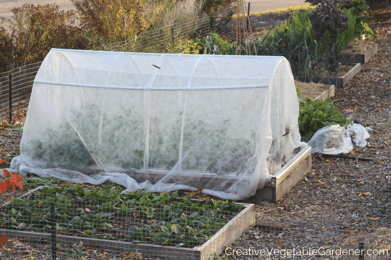 Use Row Cover To Prepare Your Garden For Winter