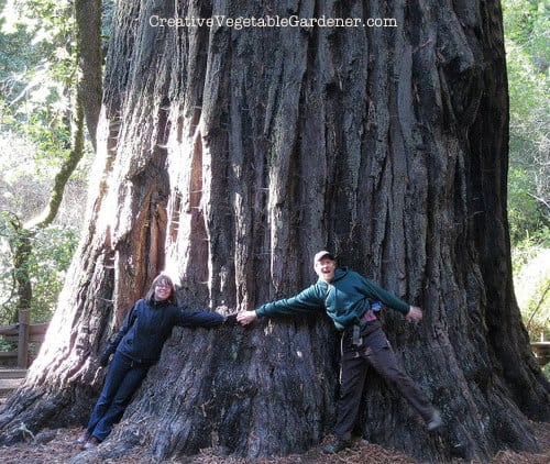 Hugging a redwood during a hike in Big Basin Redwood Forest, CA