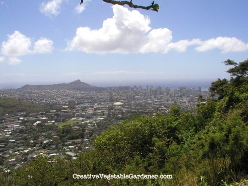 The view of Honolulu from a hike on Oahu.