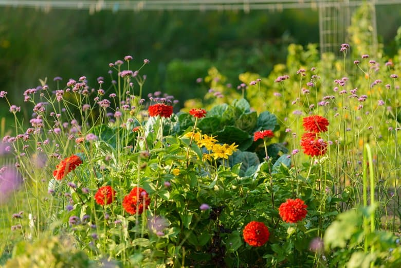 Flowers in Vegetable Garden