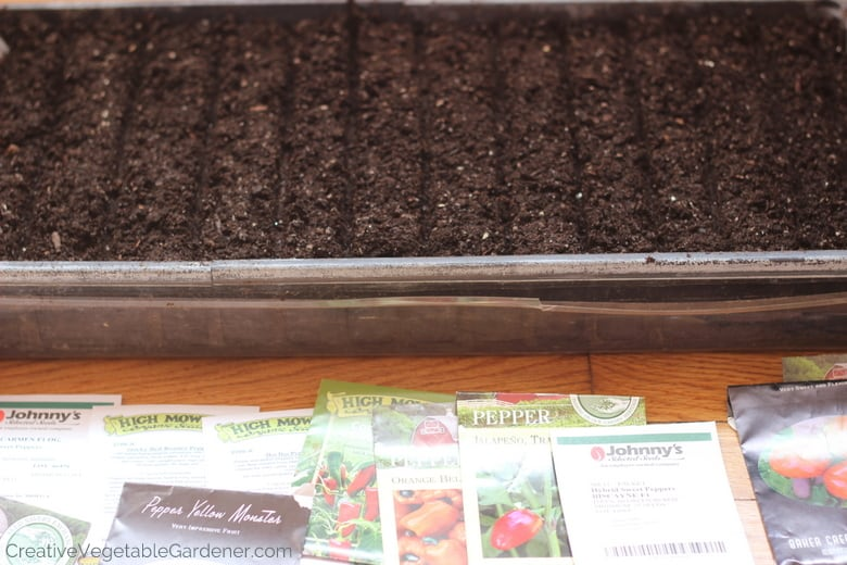 getting ready to start pepper seeds