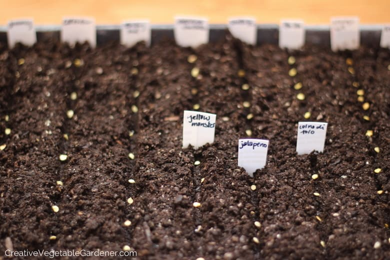 growing pepper plants at home