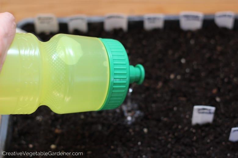 watering pepper seeds indoors