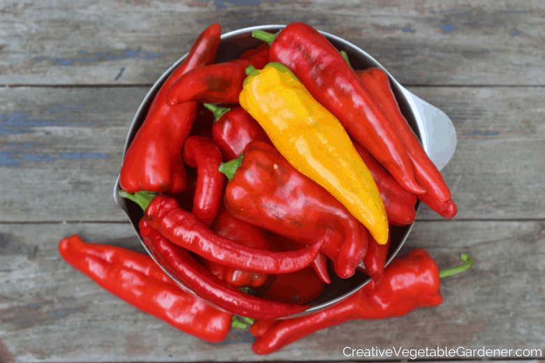 red peppers from garden how to start seed indoors