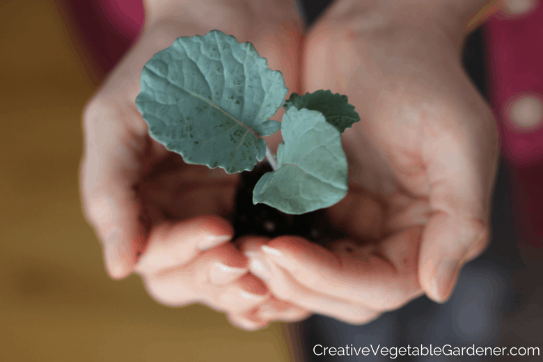 holding a new seedling reasons to start seeds indoors