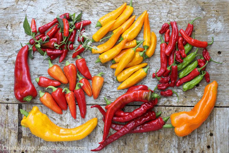 pepper varieties to start indoors
