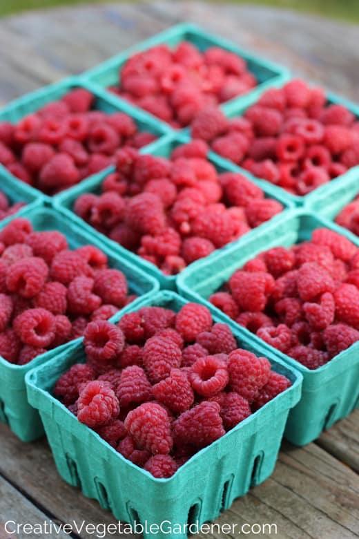 Grow Raspberries