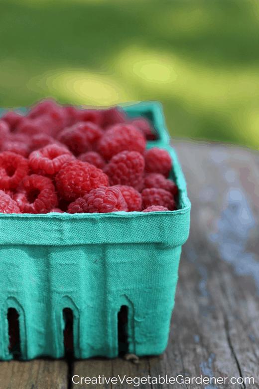 raspberries straight from garden