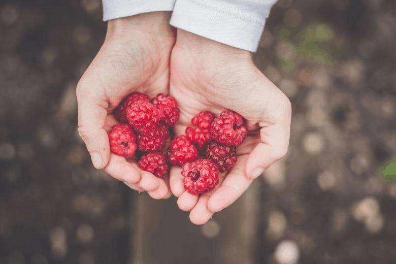 raspberry harvest from planting