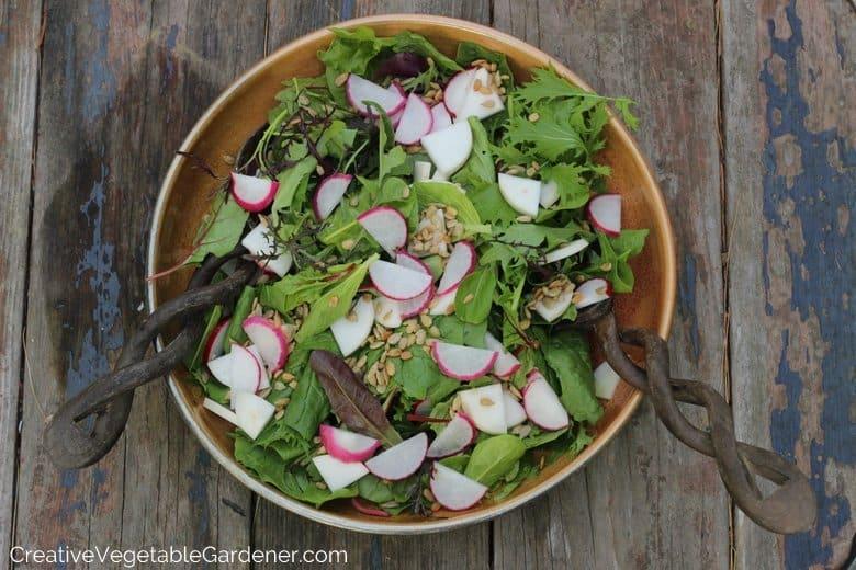 Salad garden spring