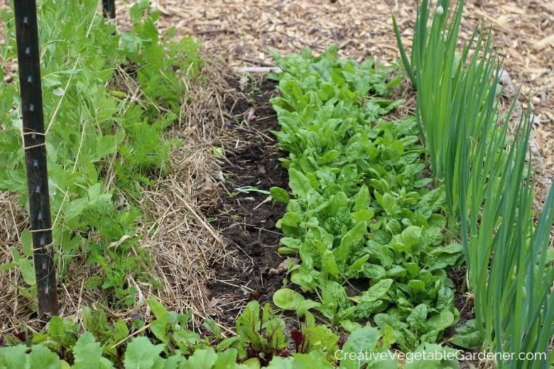 summer succession planting