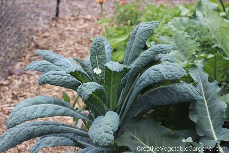 Cabbage Moth Vegetable Garden