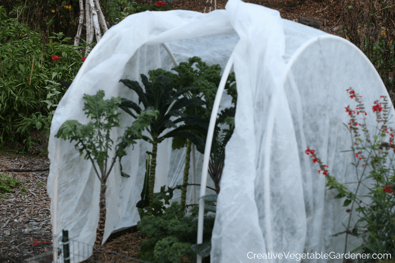 how to deal with the white cabbage butterfly