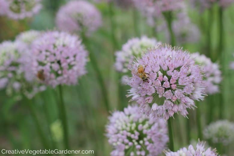 Insects in Vegetable Garden