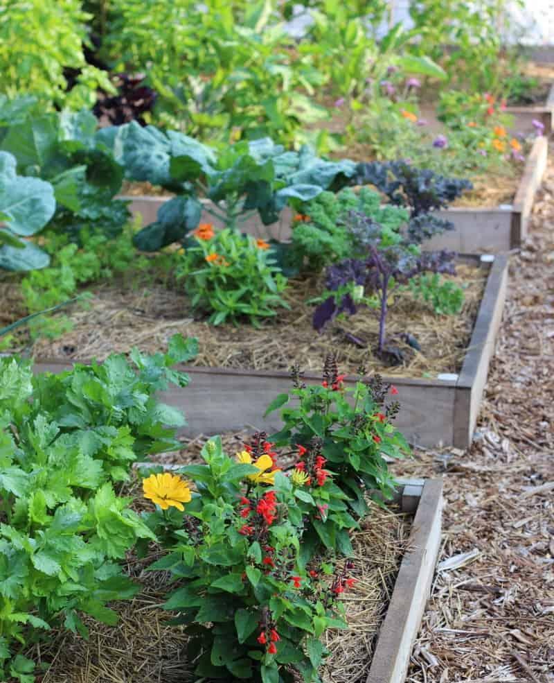 10 Creative Vegetable Garden Ideas: Creative Vegetable Gardener:Spring Challenge: Smart