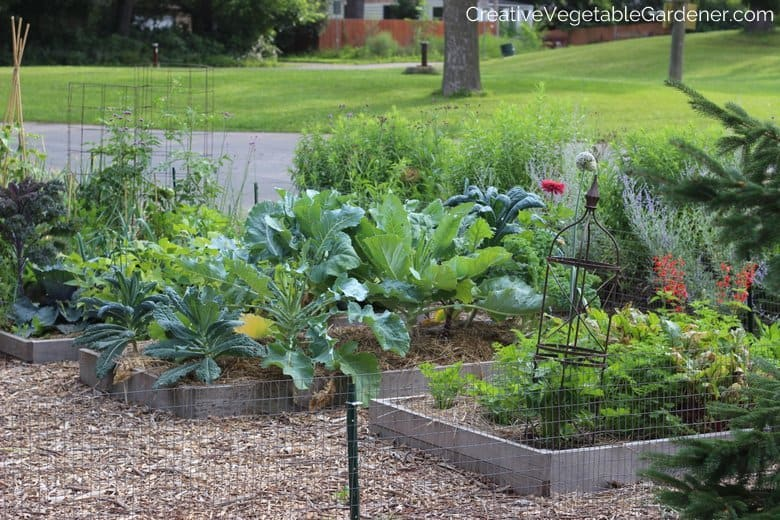 Vegetable Garden Front Yard