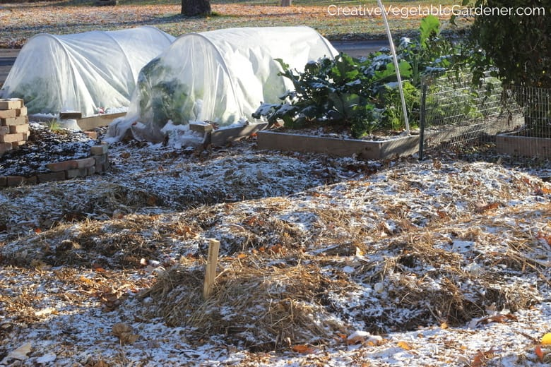 Fall Vegetable Garden Tasks
