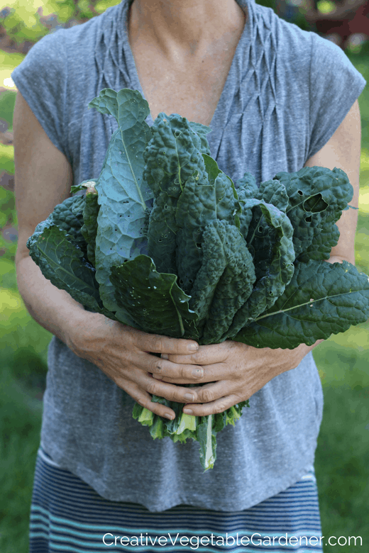 how to quickly freeze kale
