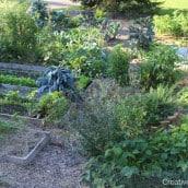 Tour of My Garden: September