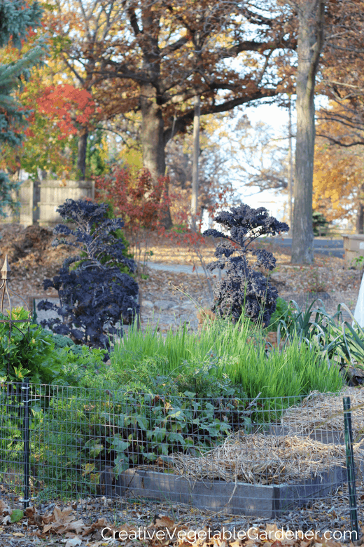 fall garden clean up to avoid vegetable garden pests