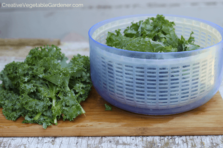 how to dry kale for freezing