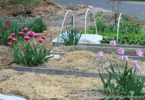 spring bulbs flowers for vegetable garden