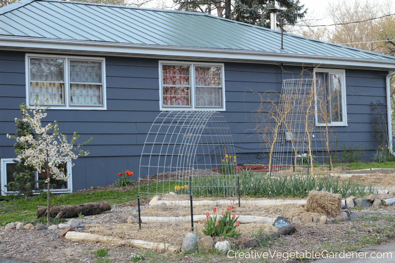 early spring vegetable garden with added bulbs for color