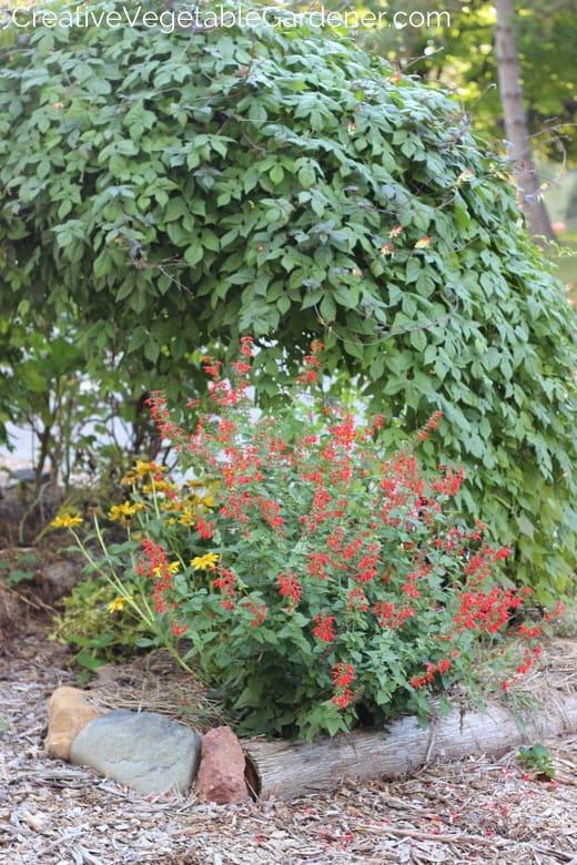 Common Mistakes in Garden