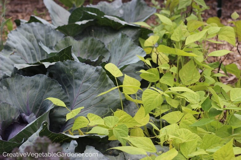 Common Vegetable Garden Mistakes