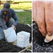 Why You Should Grow Garlic in Your Garden