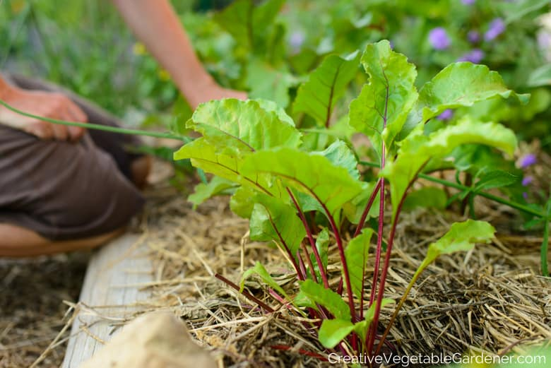 Top Vegetable Gardening Blog Posts