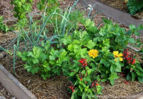 Raised bed vegetable garden with flowers