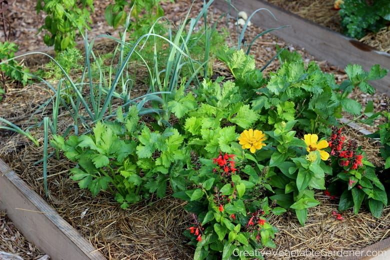 Creative Vegetable Gardener How To Start A Small Vegetable Garden
