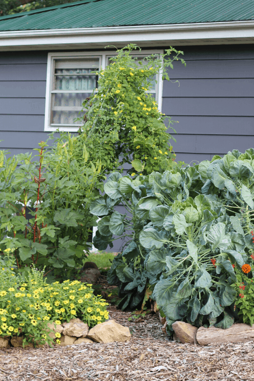 planning small garden tips