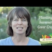 How to Plant a Summer Cover Crop