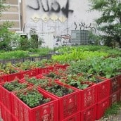 Growing a Family of Big City Gardeners