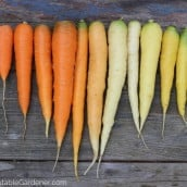Grow These Unique and Colorful Varieties This Year
