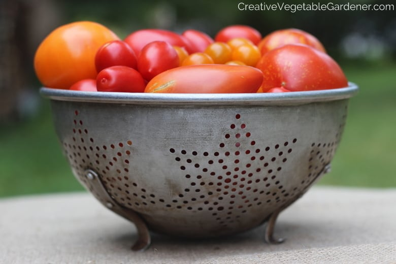 tomatoes are easy seeds to start indoors