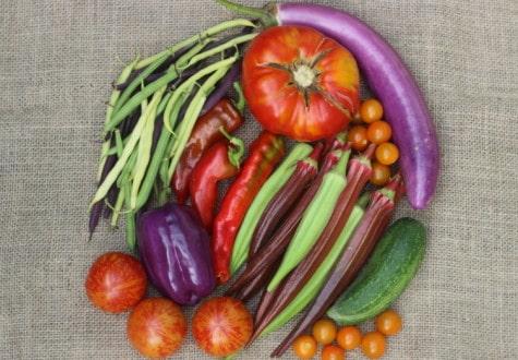 Increase your garden harvest