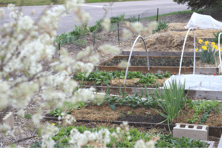 vegetable garden in spring