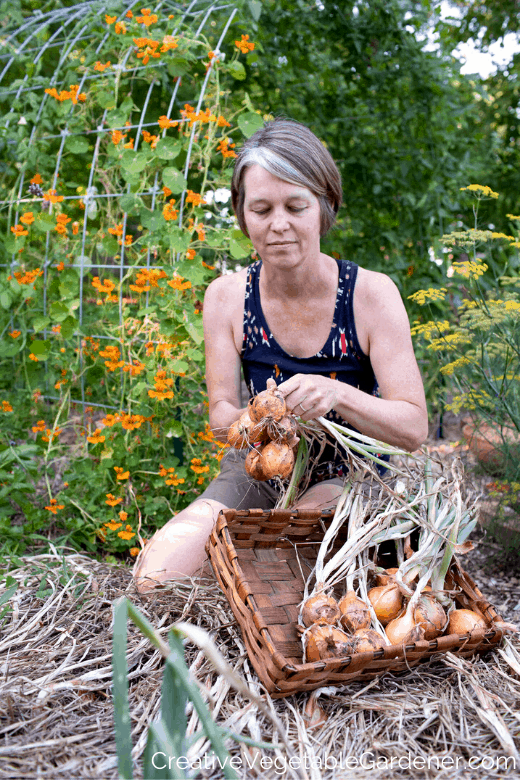 woman harvesting onions