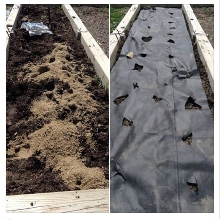 preparing a garden bed to plant sweet potatoes