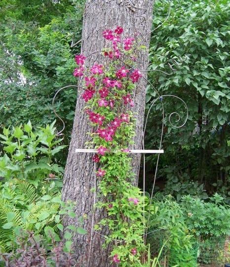 copper garden trellis