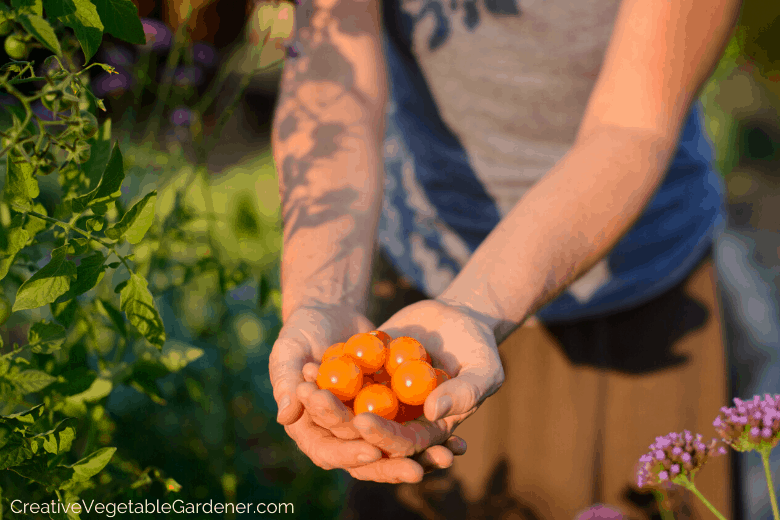 how to build a diy tomato cage