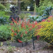Design a Decorative Vegetable Garden with a Rainbow of Colorful Plants