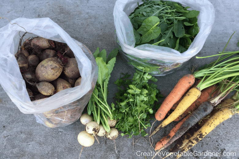 vegetable garden harvest from planting a fall garden