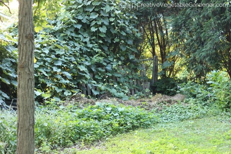 back yard garden tour